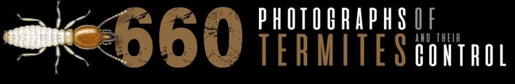 Phototermes